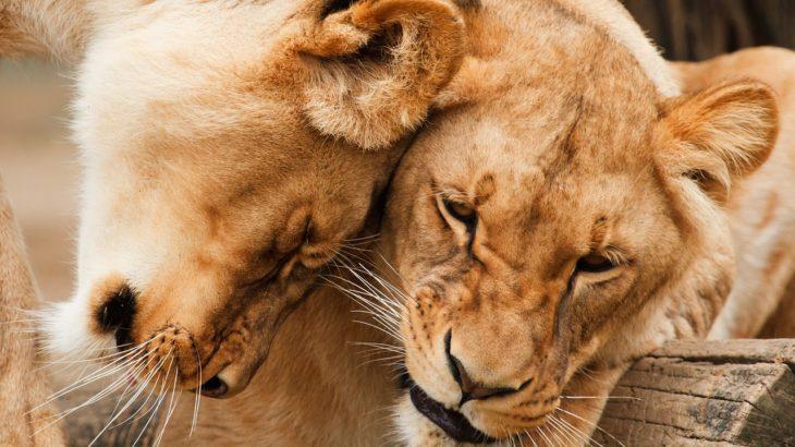 LION MEDIAテーマのスタイルガイド